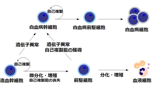 白血病 治療: 白血病